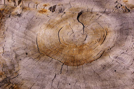 Tree rings on stump after a forest fire on the  Kaibab Plateau, Arizona Imagens