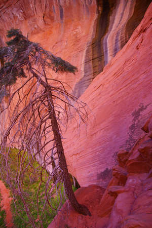 taylor: Abstract background patterns - sheer cliff face rises along the Taylor Creek trail, Kolob Canyon, Zion National Park, Utah