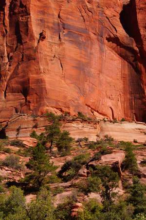 taylor: Deep red and orange cliffs in narrow canyon along the Taylor Creek trail, Kolob Canyon, Zion National Park, Utah