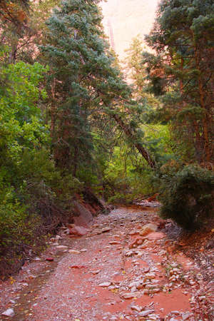 taylor: Taylor Creek trail follows the stream in , Kolob Canyon, Zion National Park, Utah