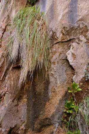 cliff face: Grass and lichen cling to cliff face  on the forested Riverside Walk in Zion National Park, Utah
