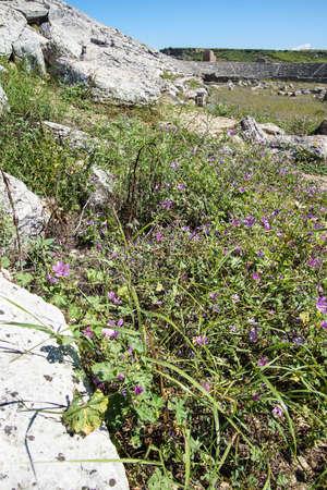 Purple wildflowers survive among the ruins of the Roman stadium hippodrome Perge,  Turkey