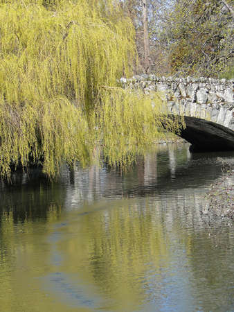 willows: Willows and bridge reflected in pond, Beacon Hill Park, Victoria, BC, Canada