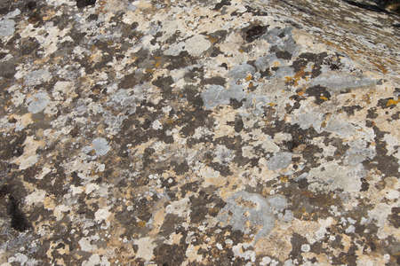 hierapolis: Lichen patterns on ancient tomb near the Arch of Domitian Hierapolis, Turkey