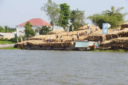 cai: CAI RANG, VIETNAM - FEB 7, 2015 - Men unload a cargo boat loaded with timber,  Cai Rang,  Vietnam Editorial