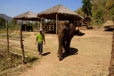 mahout: Mahout rides his elephant in the  Elephant conservation camp near Kalaw Myanmar (Burma) KALAW, BURMA - FEB 27, 2015 - Mahout walks beside his elephant in the  Elephant conservation camp near Kalaw Myanmar (Burma)