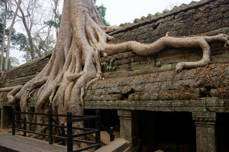 ta: Huge tree roots engulf the ruined temple of Ta Prohm,  Cambodia Stock Photo
