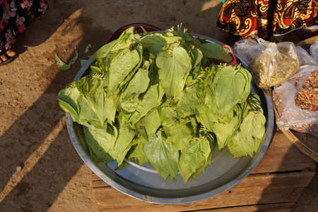 intoxicant: Betel leaves for making  paan, at the central market, Kyaukme, Myanmar (Burma)