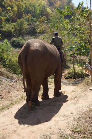 mahout: Mahout rides his elephant in the  Elephant conservation camp near Kalaw Myanmar (Burma) Stock Photo