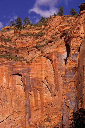 confine: Sheer cliffs confine the Virgin River  on the forested Riverside Walk in Zion National Park, Utah Stock Photo