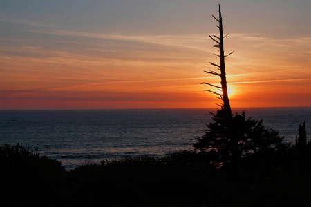 hemlock: Con�feras enganchar al atardecer en la costa de Oregon