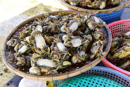hoi an: Crabs on display in the central market of  Hoi An, Vietnam