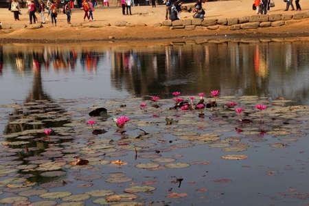 Lotus pond reflects progression of tourists visiting  Angkor Wat,  Cambodia
