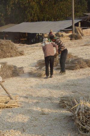 lye: KYAUKME, MYANMAR - FEB 21, 2015 - Pounding bamboo to remove dried lye, to make bamboo paper, Kyaukme Myanmar (Burma)
