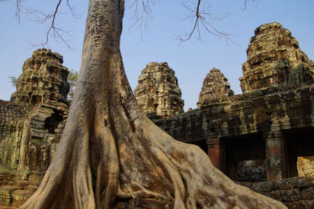 invasive plant: Stone terrace engulfed by huge tree roots, Ta Prohm,  Cambodia