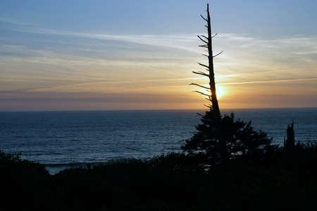 cicuta: Con�feras enganchar al atardecer en la costa de Oregon
