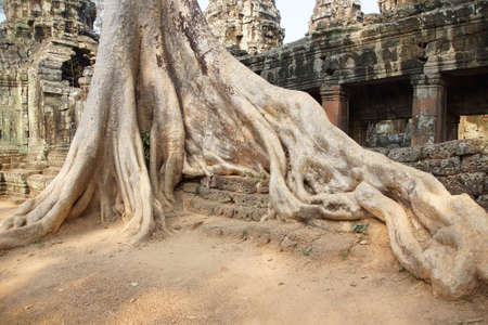 huge: Stone terrace engulfed by huge tree roots, Ta Prohm,  Cambodia