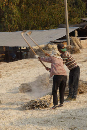 Pounding bamboo to remove dried lye, to make bamboo paper, Kyaukme Myanmar (Burma)