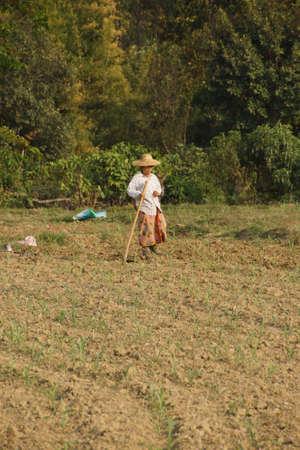 to tend: KYAUKME, MYANMAR - FEB 21, 2015 - Local villagers tend their fields near Kyaukme Myanmar (Burma)