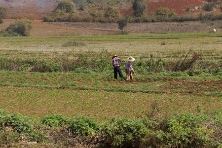 to tend: Women tend their fields, near  Pyin Oo Lwin ,  Myanmar (Burma) Stock Photo