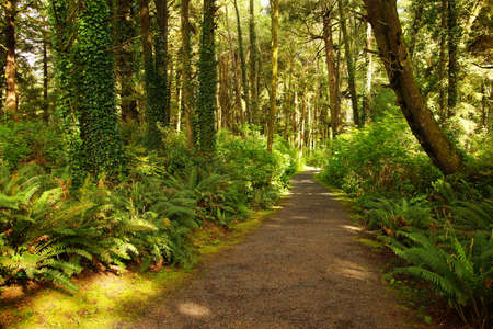 temperate: Ferns along a coastal forest trail, Otter Crest, Oregon Coast