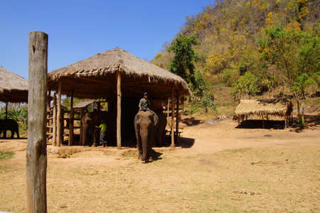 mahout: KALAW, BURMA - FEB 27, 2015 - Mahout trainer with his elephant in the  Elephant conservation camp near Kalaw Myanmar (Burma)