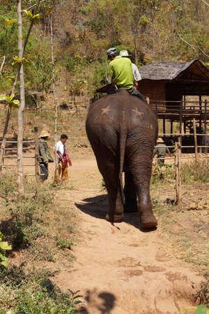 mahout: KALAW, BURMA - FEB 27, 2015 - Mahout and  his elephant return after her bath , Elephant conservation camp near Kalaw Myanmar (Burma)