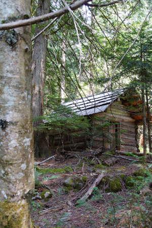 mount rainier: Log cabin in conifer forest, Mount Rainier National Park