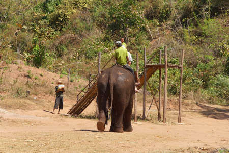 mahout: KALAW, BURMA - FEB 27, 2015 - Mahout and  his elephant return after her bath , Elephant conservation camp near Kalaw Myanmar (Burma)