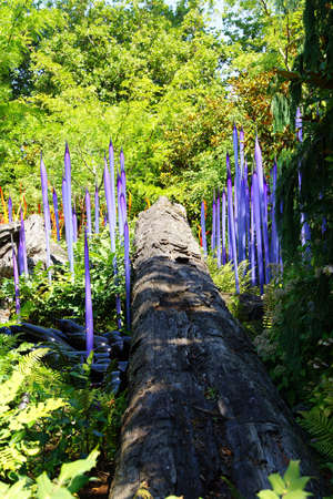 chihuly: SEATTLE - JUL 23, 2015 - Purple blown glass tubes rise among lilies in the  Chihuly Garden and Glass Museum,  Seattle, Washington