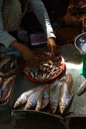 siem: Fish for sale  in the market of  Siem Reap,  Cambodia