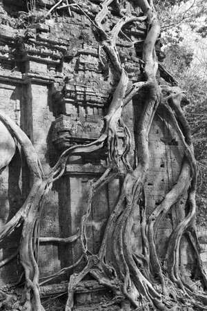 pre: Fig strangling temple, Sambor Pre Kuk, Kampong Thom,  Cambodia