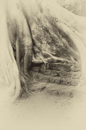 ta: Stone terrace engulfed by huge tree roots, Ta Prohm,  Cambodia