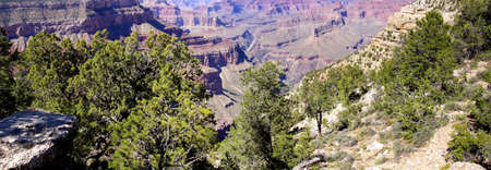 south rim: Pine trees growing on the South Rim  at the Grand Canyon National Park, Arizona