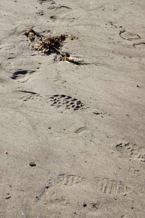 drifting: Footprint in drifting sand,  Seaside,  Oregon Coast