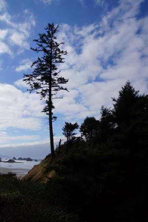 Silhouette of large conifers on coastal headland,  Indian Beach in Ecola State park,   Oregon Coast