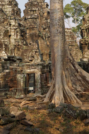 invasive plant: Tree roots overwhelm ancient temple walls, Ta Prohm,  Cambodia