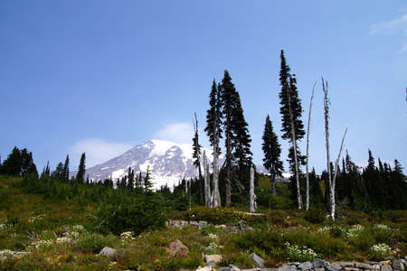 glaciers: South face and glaciers of Mt. Rainier, with conifer forest,Mount Rainier National Park