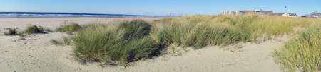 beach panorama: Panorama, Dune grass on sandy beach, Seaside, Oregon coast