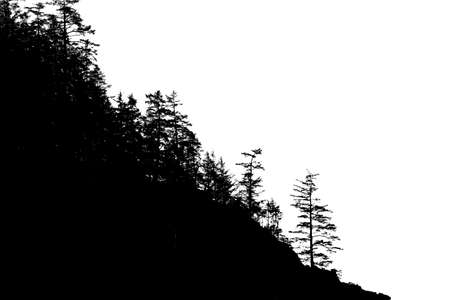 Silhouette of conifers on coastal headland,  Short Sand Beach, Oswald West State Park, Oregon