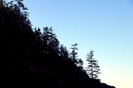 headland: Silhouette of conifers on coastal headland,  Short Sand Beach, Oswald West State Park, Oregon