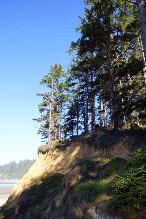 Conifer forest perches on eroding sand bluffs of  Short Sand Beach, Oswald West State Park, Oregon