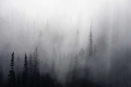fog forest: Morning mist rises from conifer forest in Joffre Lakes Provincial Park, British Columbia, Canada Stock Photo