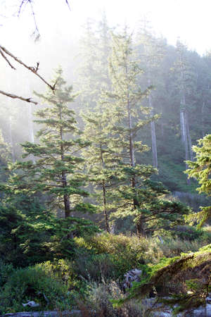 oswald: Morning sun streams through old growth forest on beach edge of  Short Sand Beach, Oswald West State Park, Oregon