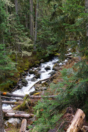 provincial forest parks: Joffre Creek cascades down narrow forest ravine in Joffre Lakes Provincial Park, British Columbia, Canada