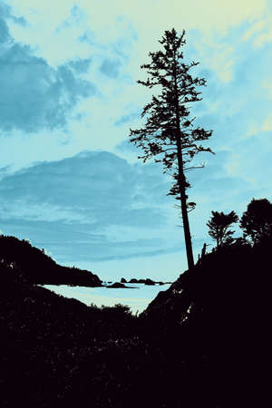 headland: Silhouette of large conifers on coastal headland,  Indian Beach in Ecola State park,   Oregon Coast