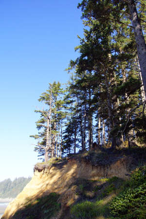 oswald: Conifer forest perches on eroding sand bluffs of  Short Sand Beach, Oswald West State Park, Oregon