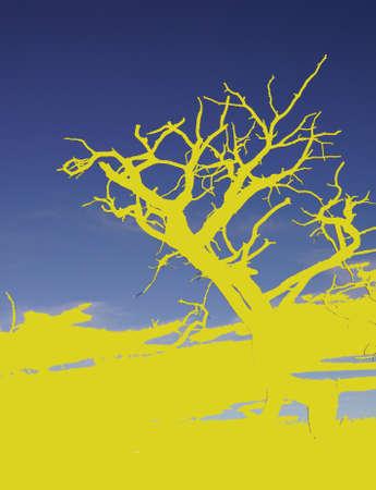 モハーベ ポイント、ホピポイント、グランドキャニオン国立公園、アリゾナ州で後半午後ビュー間のジュニパー暗礁 写真素材