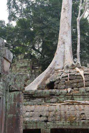 overwhelm: Tree roots overwhelm ancient temple walls, Ta Prohm,  Cambodia