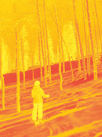 steamboat: Downhill woman  skier  amid bare winter aspens at  Steamboat Springs, Colorado  Stock Photo
